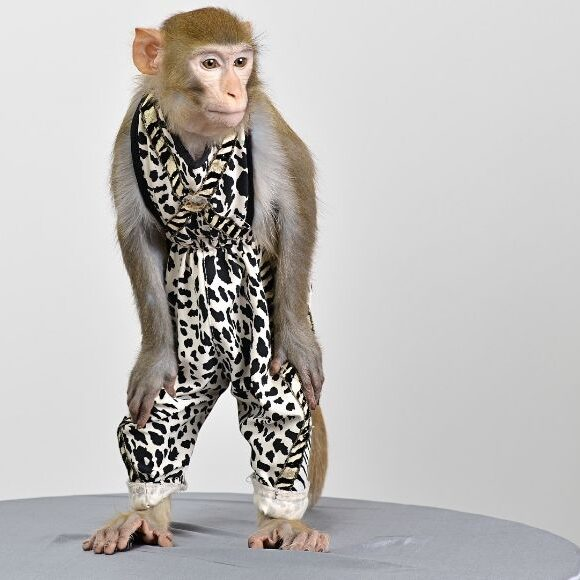 Did we evolve from monkeys?